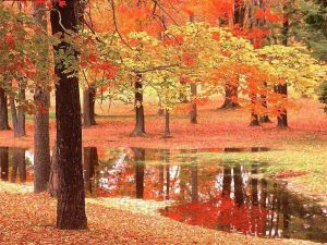 autunno-poesia-della-natura-L-ROSEEj